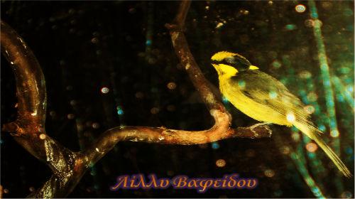 Το κίτρινο αγέρωχο φλωράκι