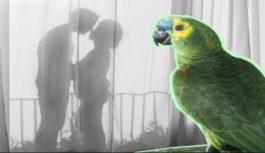 Παπαγάλοι: Oι πιο αξιόπιστοι «ρουφιάνοι»