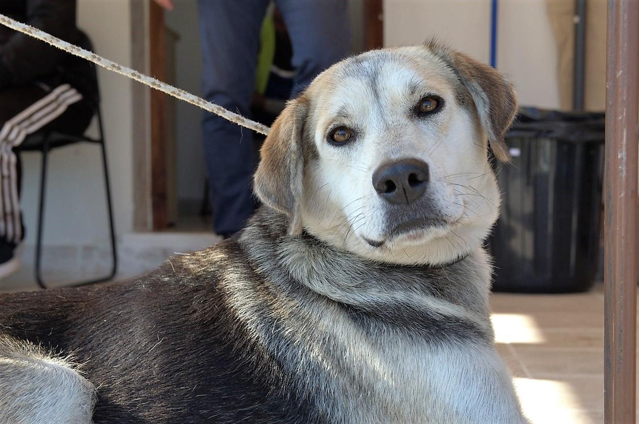 Αδέσποτα ζώα: Περίθαλψη και υιοθεσίες στον Δήμο Βόλβης